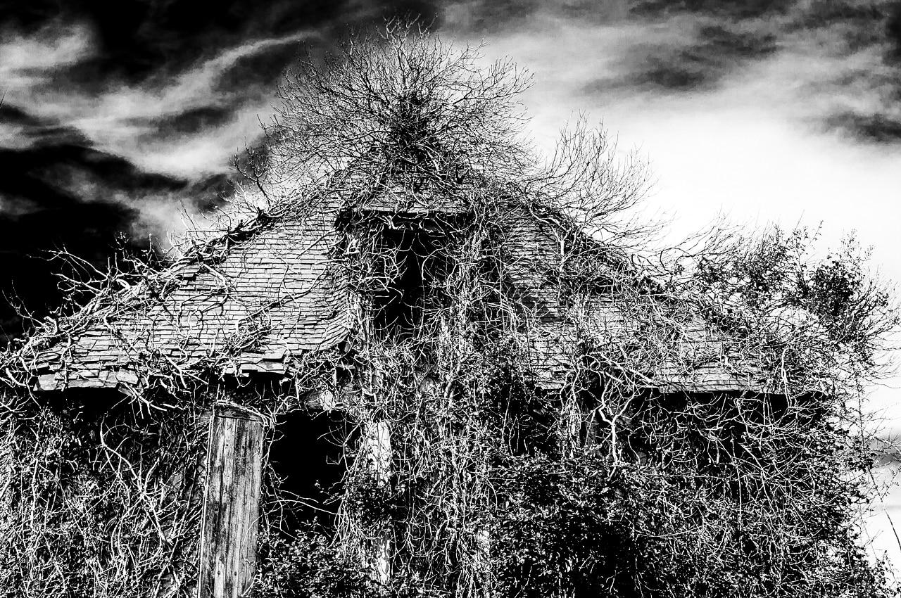Vieille maison en ruine encerclée par des ronces et branches d'arbre