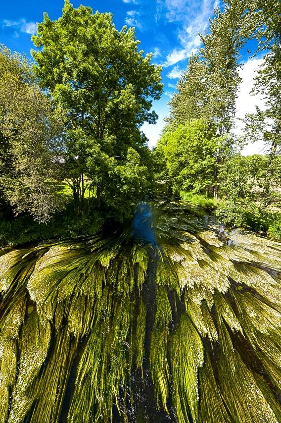 Splendide rivière avec plantes aquatiques vertes