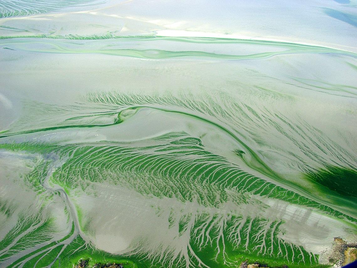 Vue aérienne - Algues vertes en Bretagne Nord